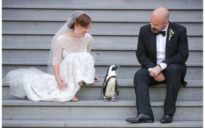 Karen + Dylan | Maryland Zoo Wedding Photos | Baltimore Wedding Photographer